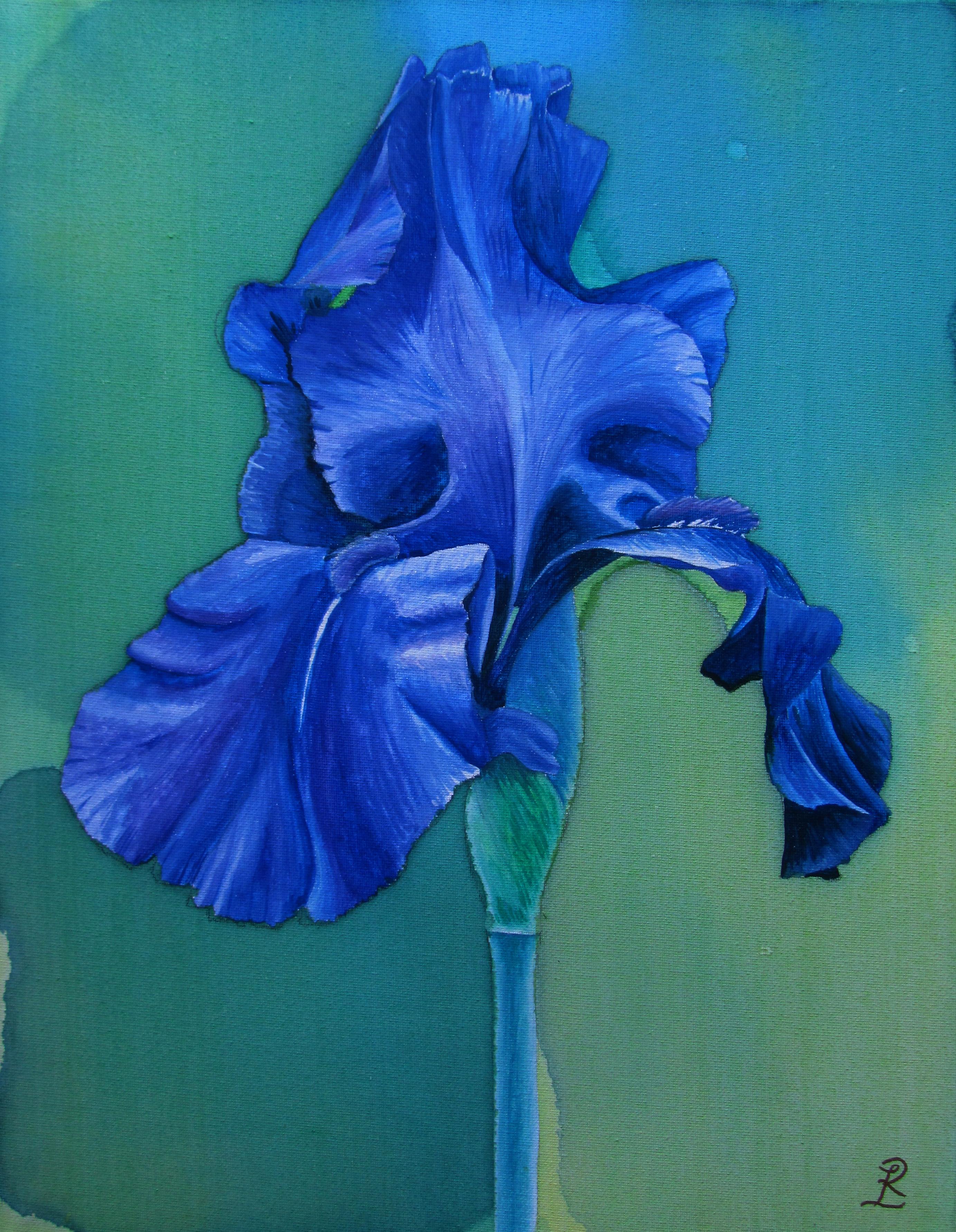 Iris on canvas