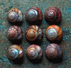 animals_nine_shells