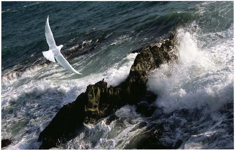 seascapes_bird_over_rocks