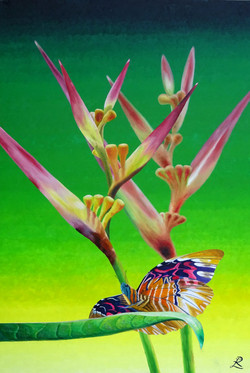 Costa Rica Monarch Butterfly