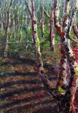 Leckhampton Birches