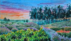 Summer Evening, Gore Heath