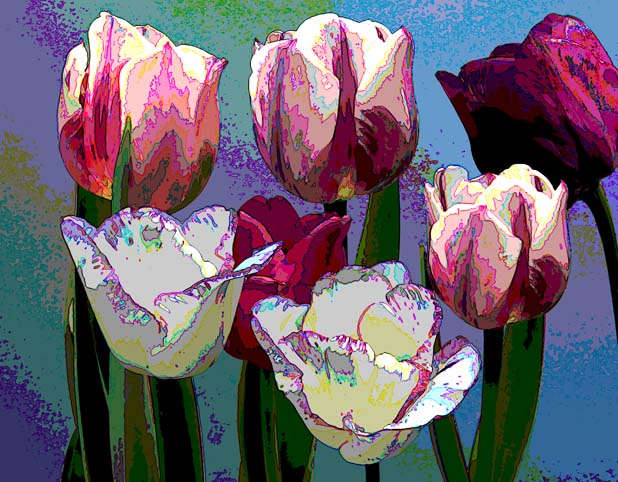 flowers_tulips_poster