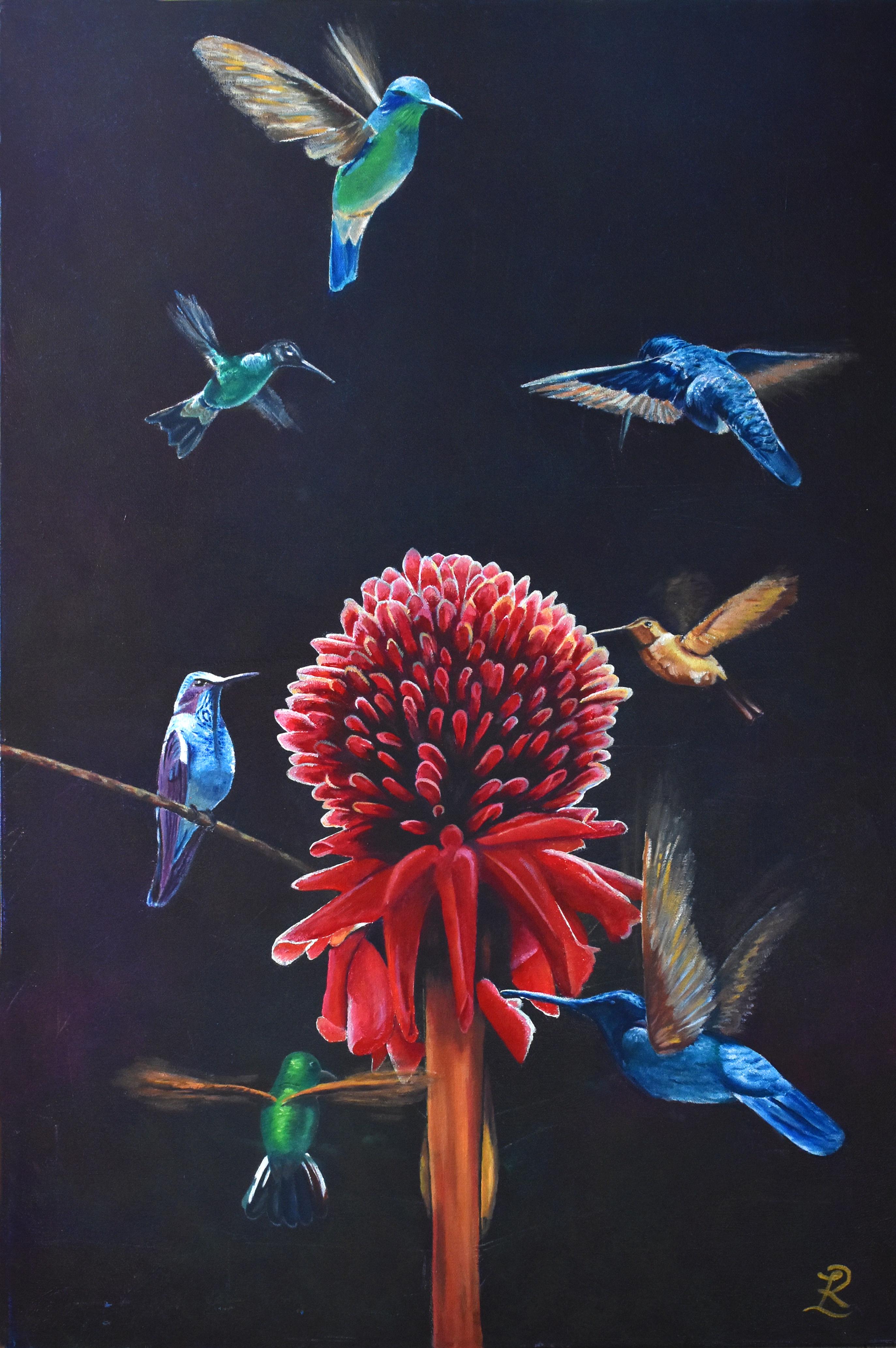 Costa Rica Feeding Hummingbirds