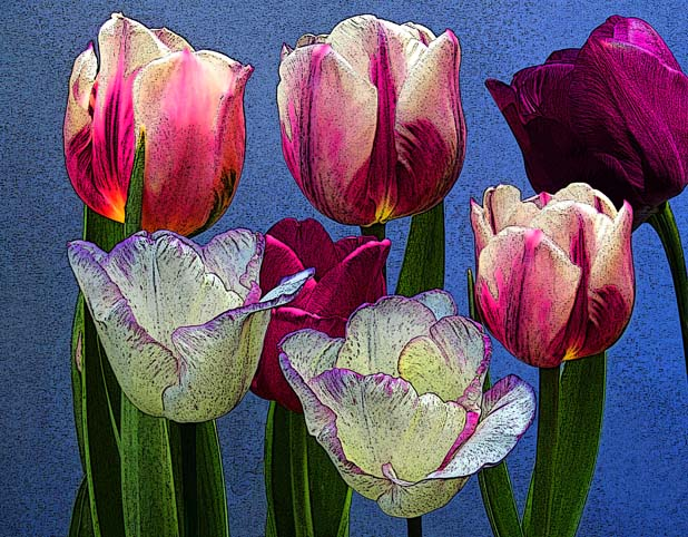 flowers_tulips_in_ink