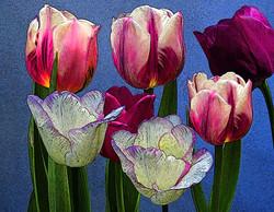 flowers_tulips_in_ink