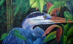 Costa Rica Heron