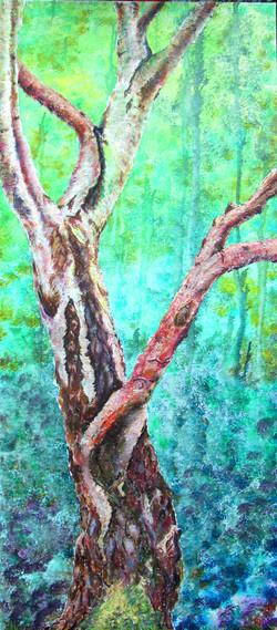 Arne, Silver Birch trunk
