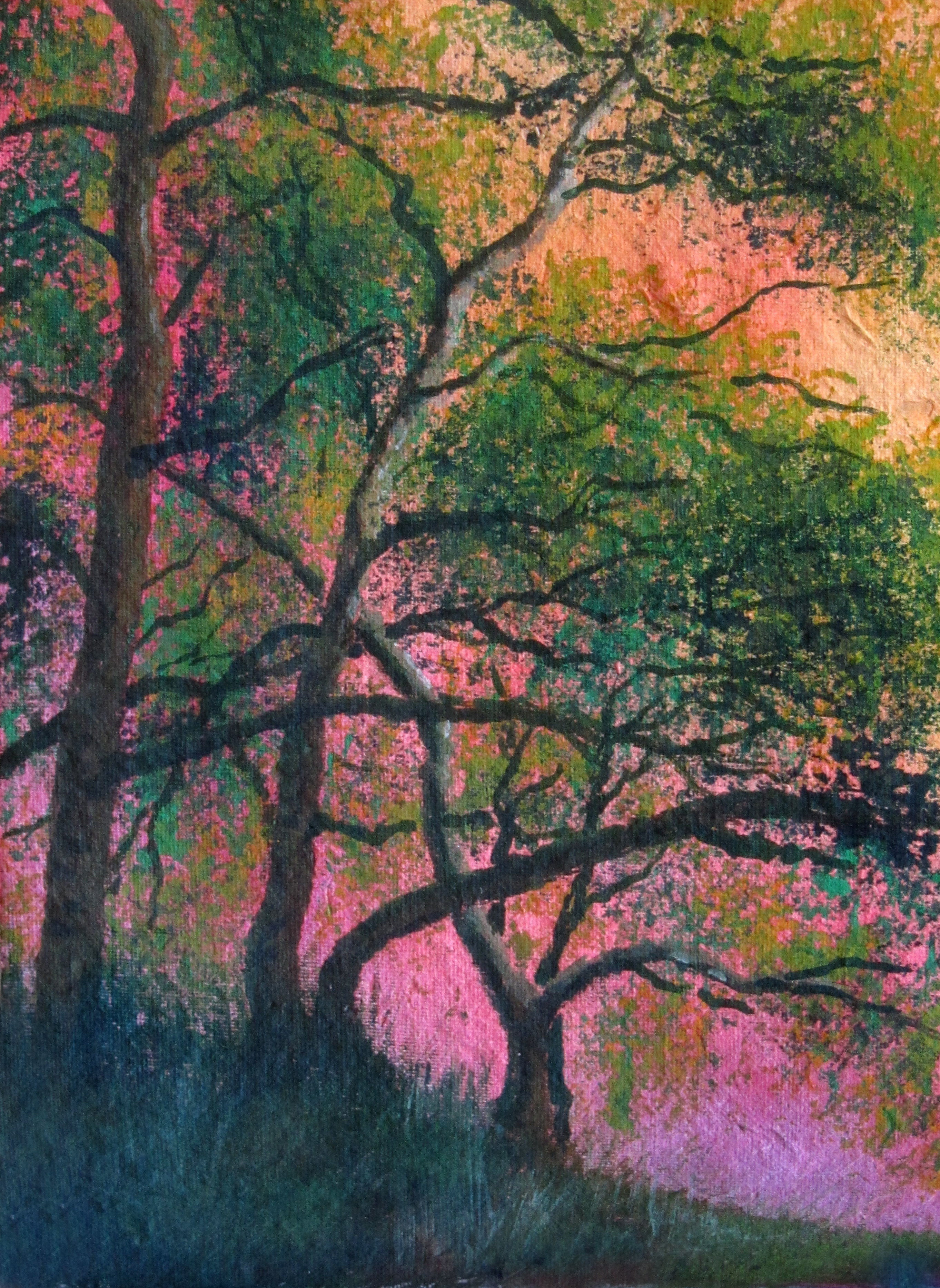 Arne, sunlight through oaks