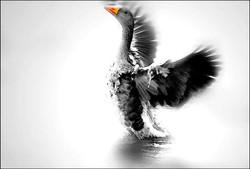 animals_freedom