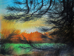Arne, Pine tree and sunset