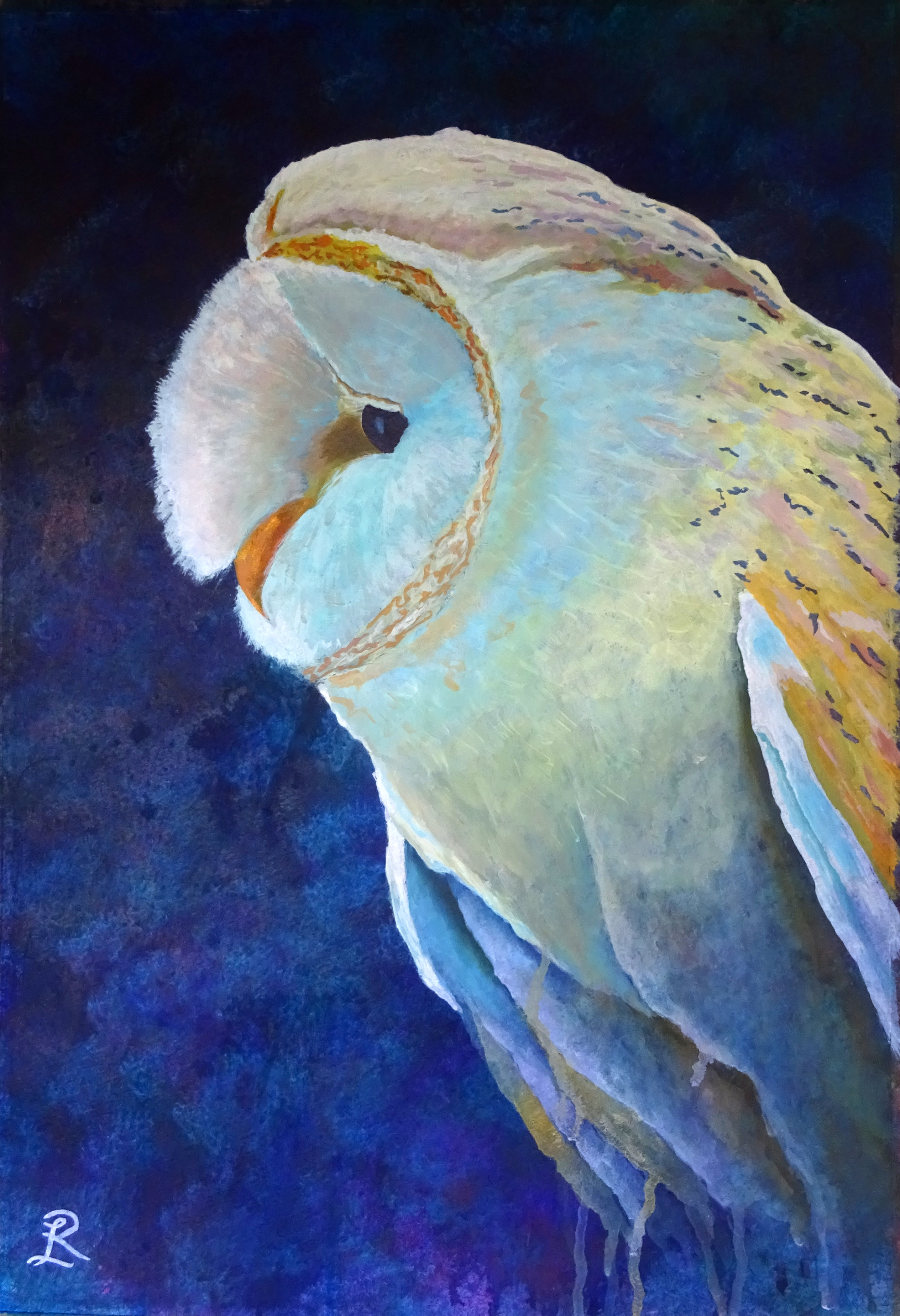 Birds 2 Barn Owl