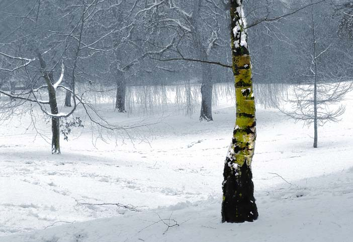 landscapes_snowy_wood