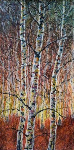 Arne, three birches in sunlight