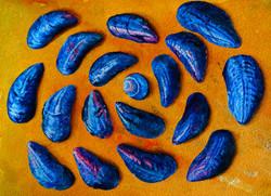 Still life mussels