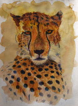 Recumbent Cheetah