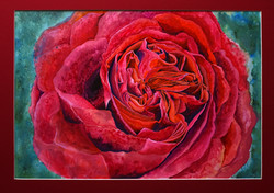 Red Rose small