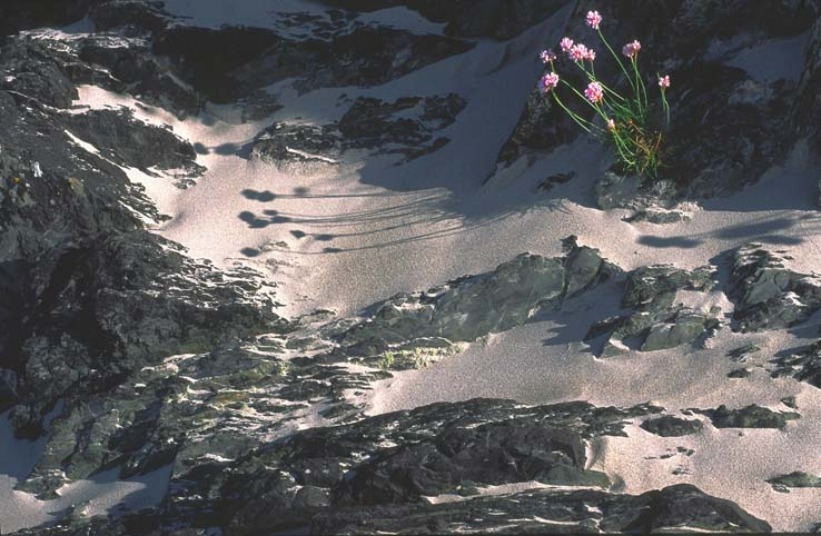 landscapes_the_seashore