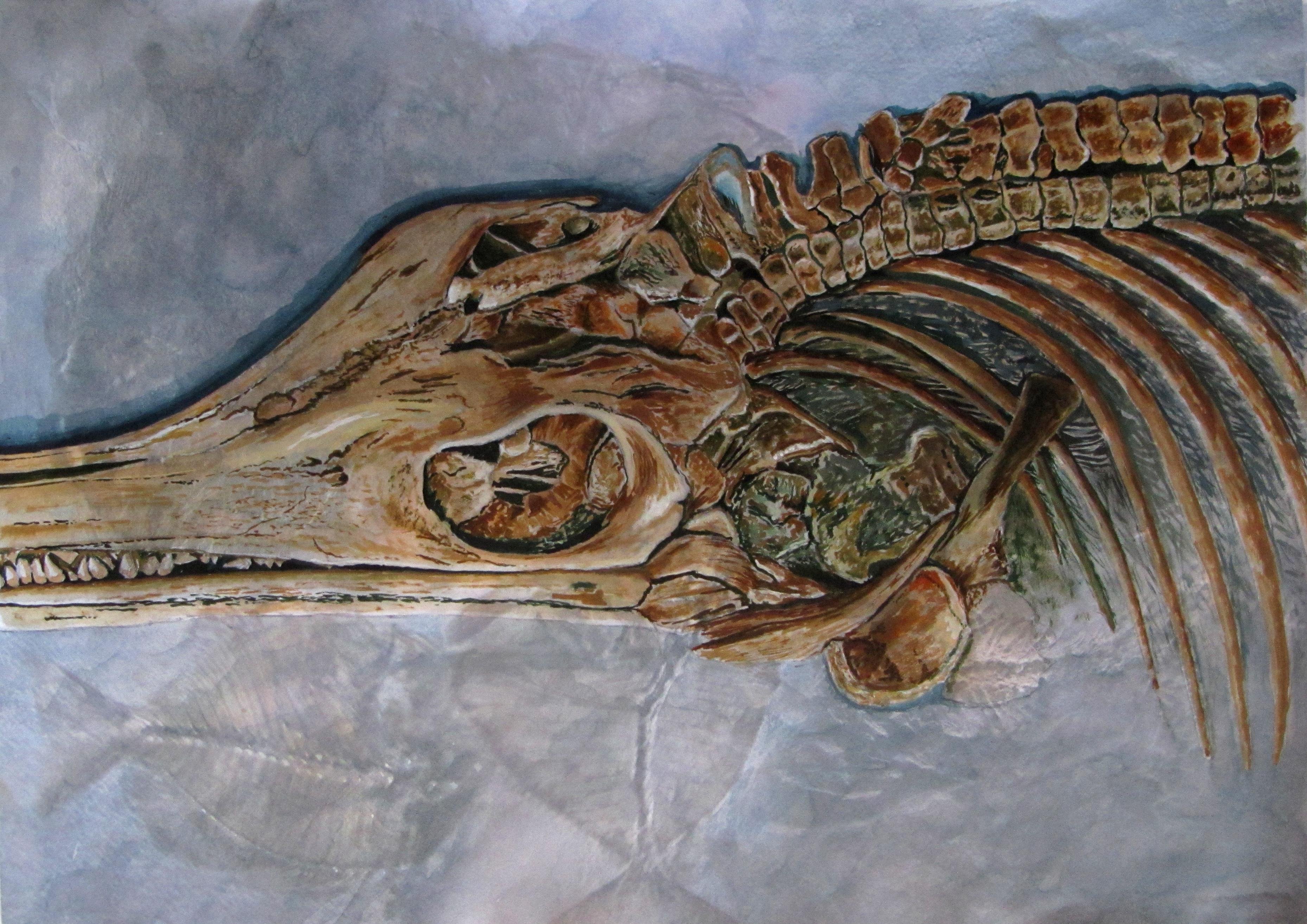 Fossil Icthyosaur in colour