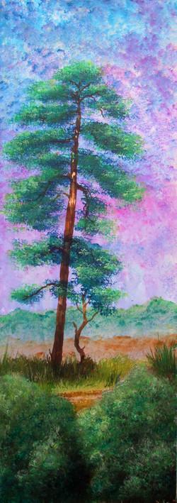 Arne, Scots Pine