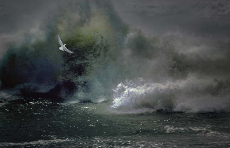 seascapes_wave_and_bird