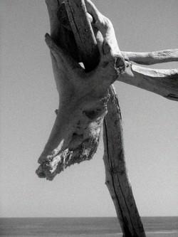 Skull grain