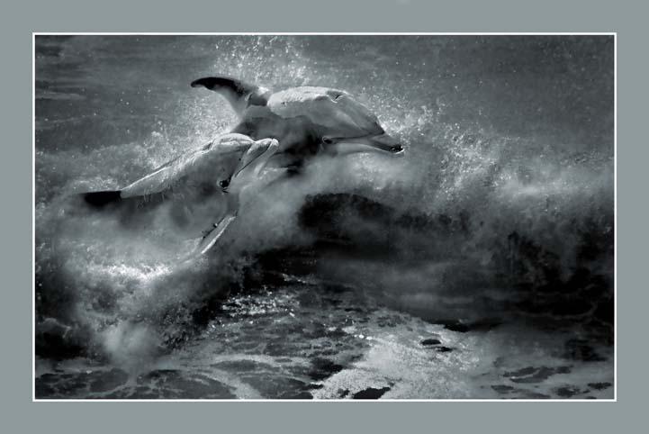 animals_dolphin