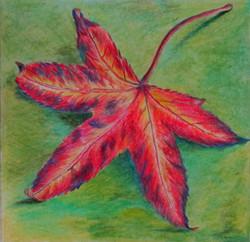 Autumn liquidambar leaf