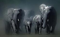animals_elephants
