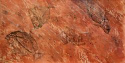 Fossil fish in strata