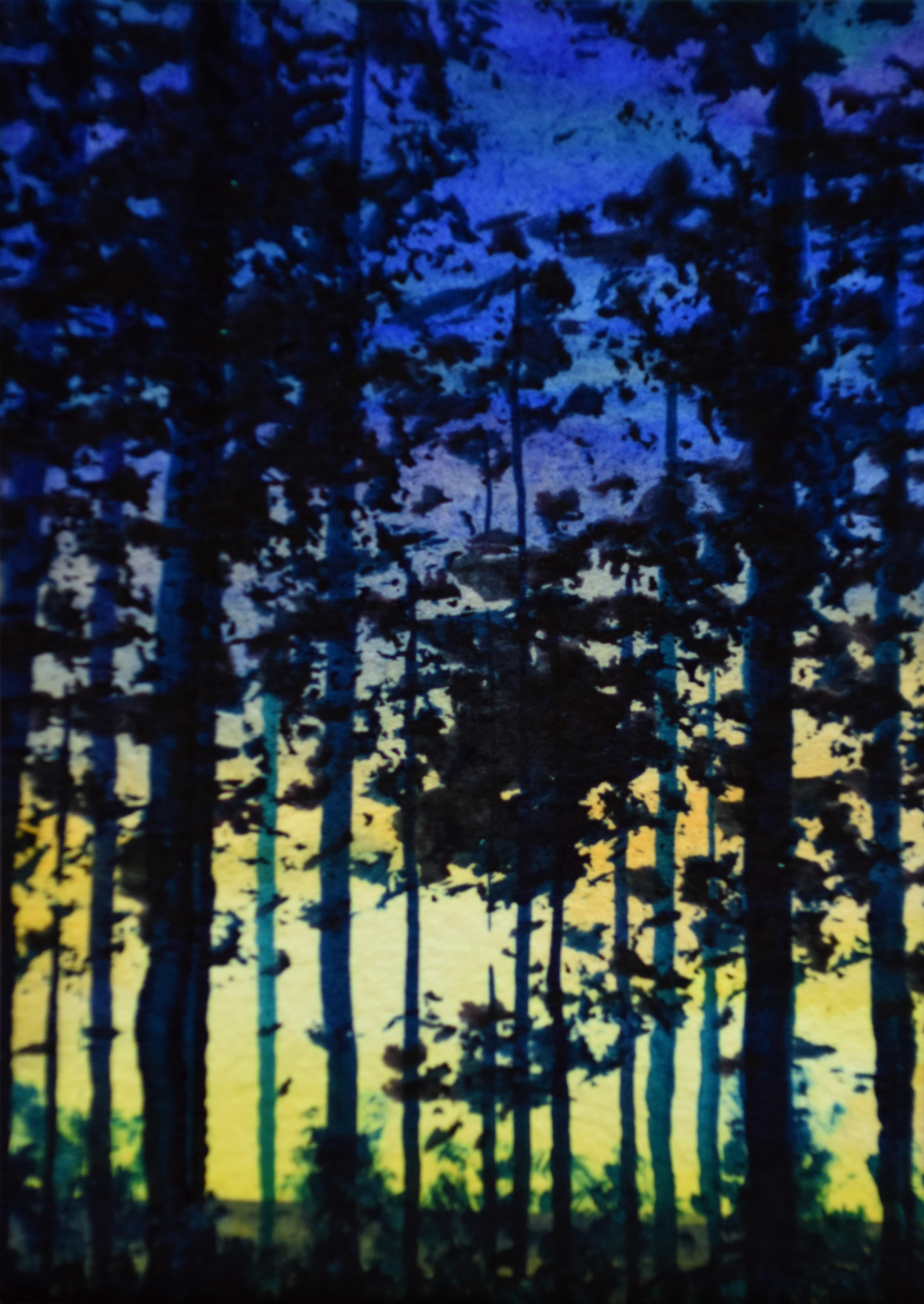 Evening in Wareham Forest