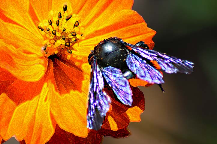 animals_marigold_and_fly_edited