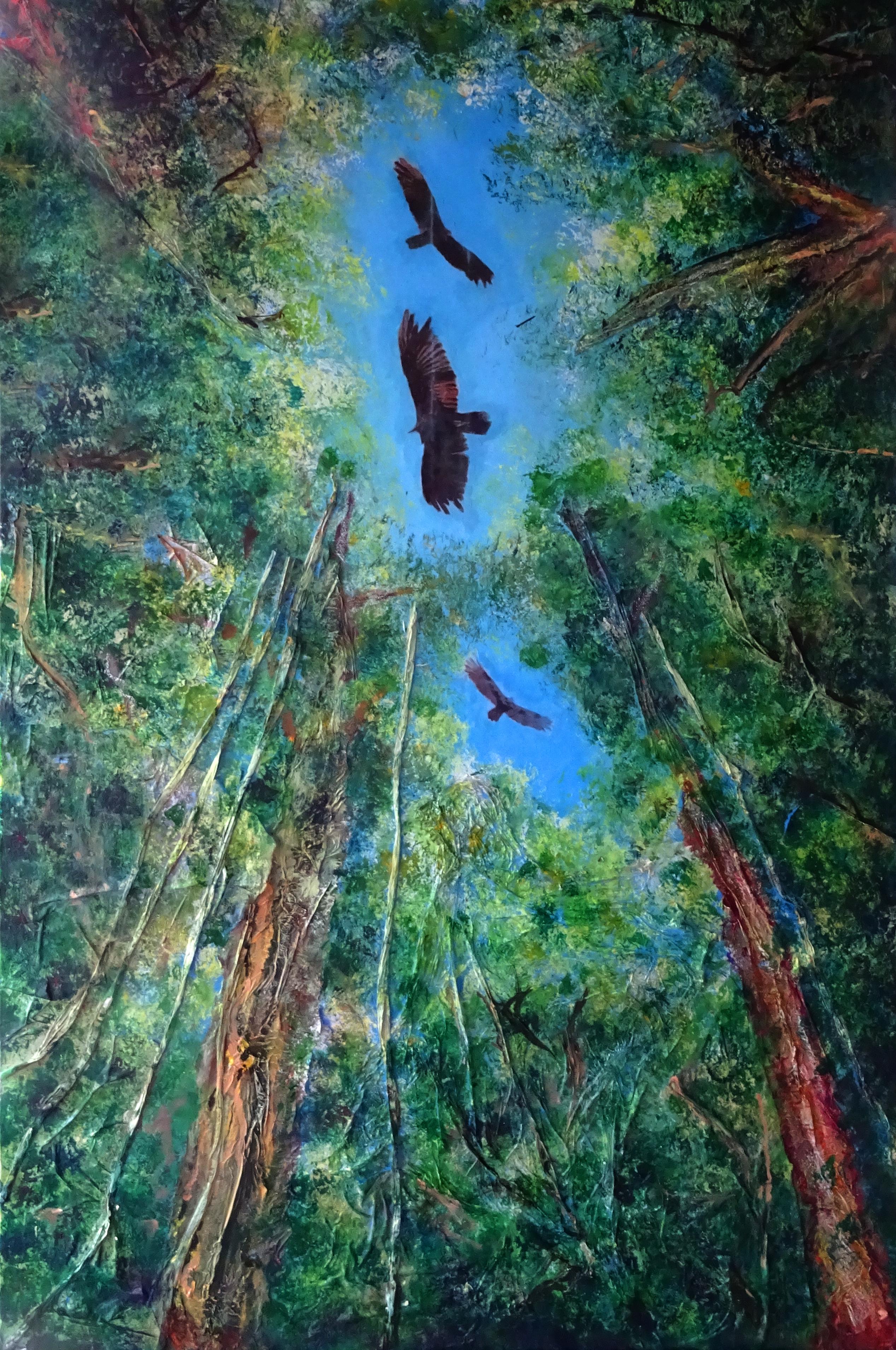 Costa Rica Soaring Vultures