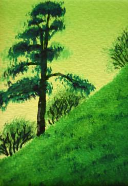 Lone pine near Woolsbarrow Fort