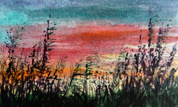 Arne, grasses at sunset