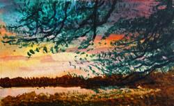 Arne, pine at sunset
