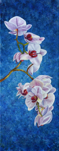 White Orchids_edited