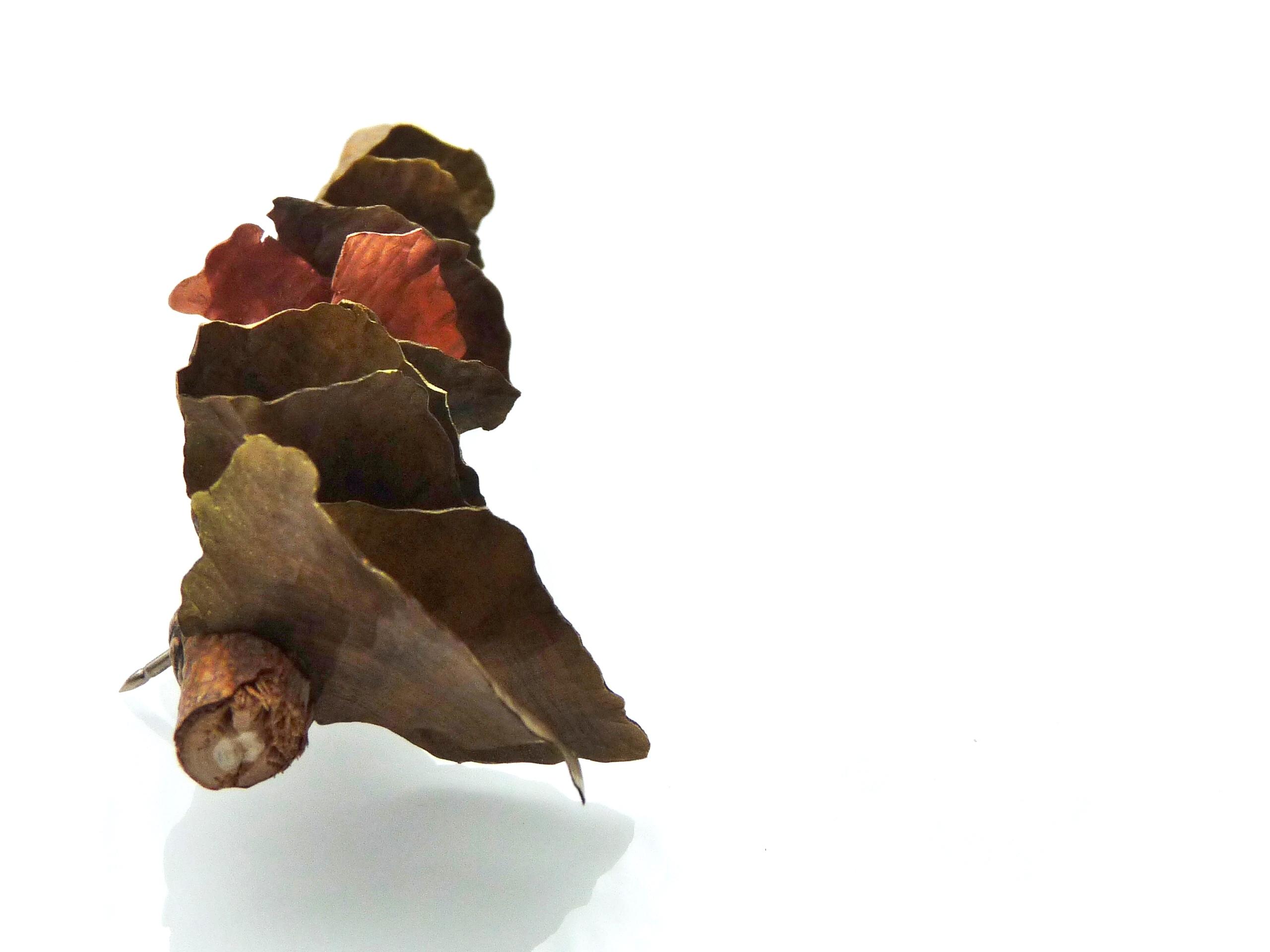 Fungus Brooch 3 (view 2)
