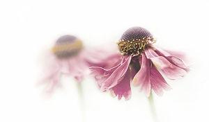 flower-2564084_640.jpg