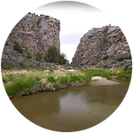 Wetland_Stream_Icon.png