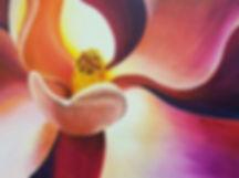 Magnolia Sunrise.jpg