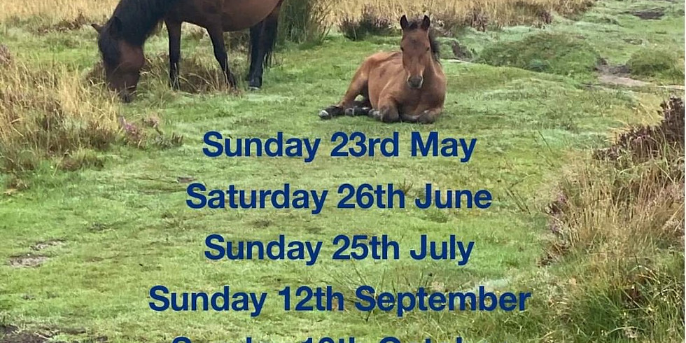 New Forest Trail Riding Days