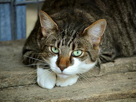 Os Gatos e a Espiritualidade