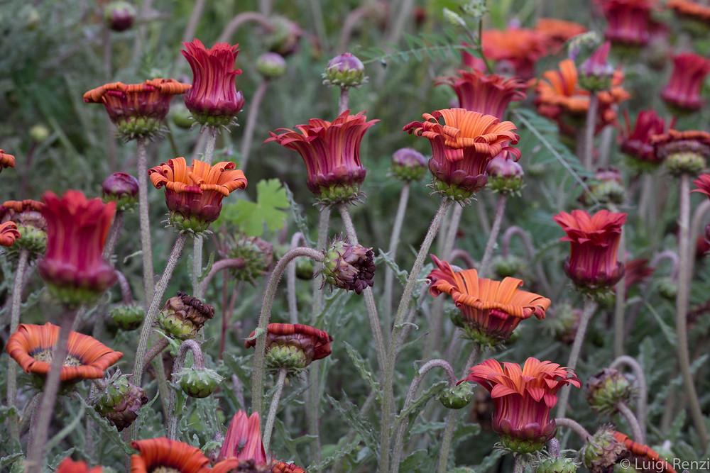 fiori al modica flower show in sicilia, Italy