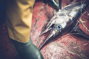 Nucleika, swordfish,Sicily,wedding,photographer,fotografo,matrimonio,catania