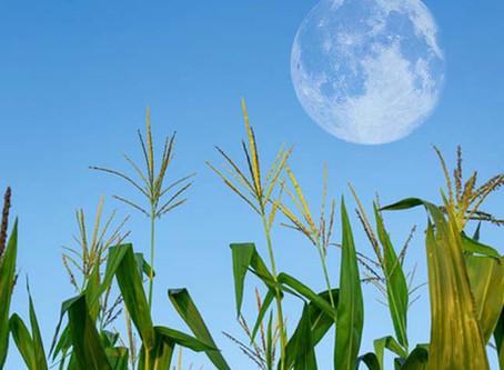 Full Corn Moon September 1: The Healer!