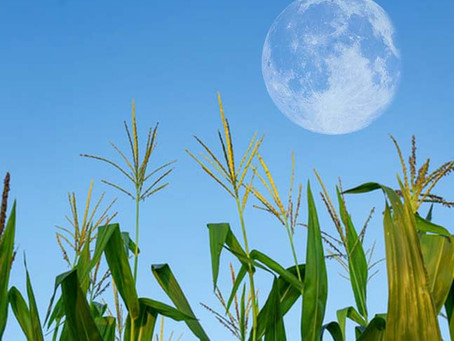 Full Corn Moon September 1: The Healer!