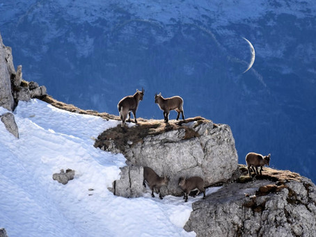 New Moon Astrology January 24:       Important New Moon for 2020!
