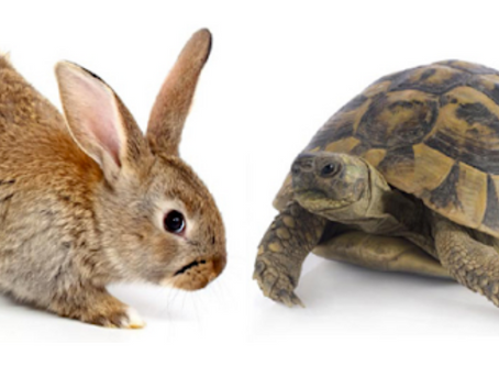 Fall 2020 Astrology: The Tortoise and the Hare
