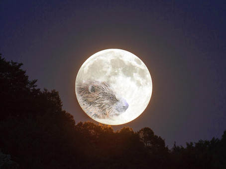 Full Moon November 12: Everything You Need to Know!